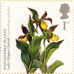 Lady's Slipper Orchid Endangered Plants and 250th Anniversary of Kew Gardens 1st British Stamp (2009)