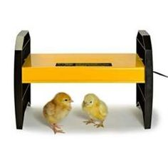 One of THE best chicken products ever-no more dangerous brooder heat lamps!  ~Brinsea EcoGlow 20 Chick Brooder