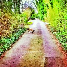 Von Spears waits for me as we head home on our afternoon walk.