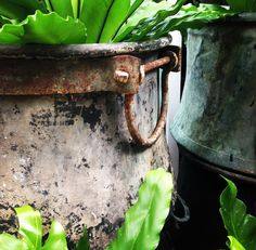 Featuring our vintage, copper planter from Turkey. With a beautiful patina and rusted handles and shackles, each one of these pots is unique and just a little bit different from the other. They look incredible with our Bird's Nest ferns. Suitable indoors or out.427, Darling Street, Balmain, 2041 Website: www.lumuinteriors.com Email: hello@lumuinteioriors.com. Phone: 0427 427 752