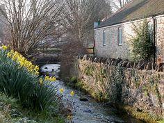Spring morning - Wookey Hole, Somerset, UK. ID DSCN8502