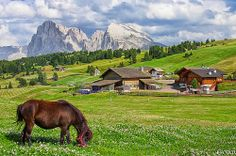ITALIAN ALPS, Alpe di Siusi, Seiser Alm (2000 mt. ca) - Località Compaccio, Compatsch | Flickr - Photo Sharing!