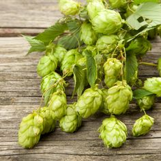 Hops, best known for beer-making, is actually a premier herb for relaxation. Make a hops pillow sachet with other sedating herbs for a deep & restful sleep. Severe Insomnia, Herbs For Sleep, Tea Before Bed, Herbs List, How To Make Beer, Natural Herbs, Herbal Medicine