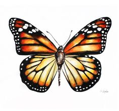 Buy Monarch butterfly(Danaus plexippus), wildlife watercolour painting, Watercolor by Karolina Kijak on Artfinder. Discover thousands of other original paintings, prints, sculptures and photography from independent artists.