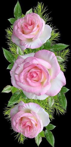 Beautiful Flowers Wallpapers, Beautiful Rose Flowers, Love Rose, Amazing Flowers, Pretty Flowers, Pink Flowers, Pictures Of Pink Roses, Rose Flower Wallpaper, Flower Photos
