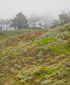 ➤ The Moody Earth This hillside next to the beach in San Francisco seemed to showcase some of the moods of the earth - the vibrant foilage contrasted with the muted colors in the fog. I love nature!   *** Prints and galleries: http://danielhopkins.com/p/i-X4x9RWQ *** #danielhopkinsphotography #California #fog #nature #plants #SanFrancisco #trees