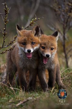 All Animals Pictures, Fox Pictures, Funny Pictures, Foto Top, Cute Fox, Wild Dogs, Funny Animal Videos, Cute Baby Animals, Spirit Animal