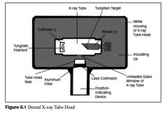 Dental Radiology for Dental Assisting Exam Study Guide Page 3 | Education.com