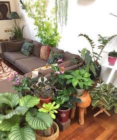 2,962 отметок «Нравится», 85 комментариев — Jamie Song (@jamies_jungle) в Instagram: «Over the holiday period I gathered all of my tropical plants from around the house and put them in…»