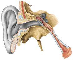 A AUDIÇÃO é a capacidade de ouvir é uma parte tão importante da nossa vida e a maioria das pessoas nem se dá conta dela. Ouvir é um dom, mas nós o valorizamos como deveríamos? A perda auditiva é a deficiência mais comum em todo o mundo, de acordo com estudos divulgados pela Sociedade Brasileira de Otologia. Sua correção pode resultar em uma melhora significativa da qualidade de vida.