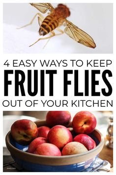 Learn the best easy ways to keep fruit flies out of your kitchen in the summer and to protect summer fruit from fruit fly damage with these simple non toxic tips to get rid of fruit flies #getridofflies #pestcontrol #fruitflies Natural Cleaning Solutions, Natural Cleaning Products, Natural Fly Trap, Get Rid Of Flies, Storing Fruit, Fruit Flies, Simple Life Hacks, Garden Pests, Summer Fruit