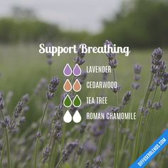 Relax and Unwind Essential Oil Diffuser Blend - aromatherapy Calming Essential Oils, Essential Oil Diffuser Blends, Essential Oil Uses, Doterra Essential Oils, Young Living Essential Oils, Doterra Diffuser, Diffuser Diy, Relax, Elixir Floral