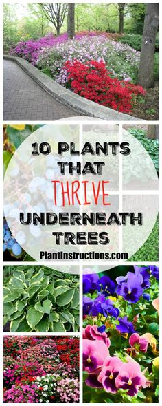 Flower Gardening Design plants that grow under trees - Looking to update your garden and make it truly stunning? These 10 plants that grow under trees will give your garden a total makeover! Shade Garden Plants, Garden Shrubs, Garden Trees, Landscaping Plants, Landscaping Ideas, House Plants, Ground Cover Plants Shade, Garden Ideas Under Trees, Gardens