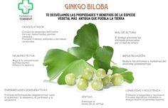Propiedades y beneficios del Ginkgo Biloba #Infografía