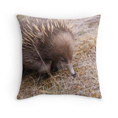 'Tasmanian Echidna' Throw Pillow by Debbie Widmer Echidna, Throw Pillows, Bird, Photography, Animals, Toss Pillows, Photograph, Animales, Cushions