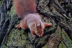 Eichhörnchen am Baumstamm - Jahreszeiten - Galerie - Community