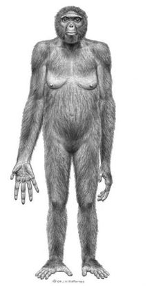 Frontal view of Ardipithecus ramidus by Jay H. Matternes