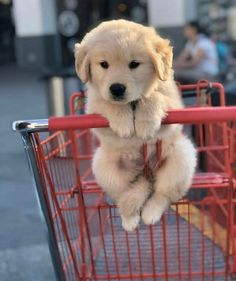 Super Cute Puppies, Baby Animals Super Cute, Cute Baby Dogs, Cute Little Puppies, Cute Dogs And Puppies, Cute Funny Animals, Funny Dogs, Doggies, Bulldog Puppies