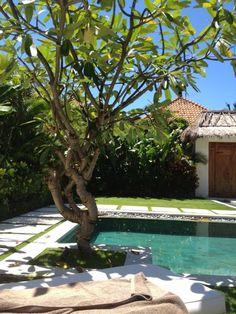 frangipani by the pool. nice combination of paving & grass.