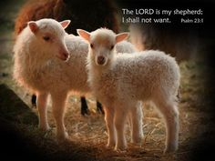 """"""" I am the good shepherd: the good shepherd gives His life for the sheep."""" The Lord Jesus Christ. I am thankful that He did."""