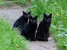 Black kitties, 1, 2, 3.