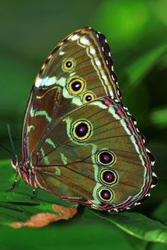 ~Butterfly in green~
