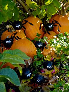 Halloween Spiders - these creepy, crawling spiders are actually pumpkins in disguise. It only takes a bit of black glitter paint, chenille stems, and googly eyes.