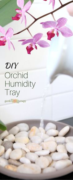 Keep Blooms Beautiful with a DIY Orchid Humidity Tray. This DIY orchid humidity tray will help the stunning blooms last longer and keep your plants much happier. And it can be used for a whole host of humidity-loving plants as well. Orchids Garden, Orchid Plants, Garden Plants, Indoor Plants, House Plants, Indoor Orchids, Potted Plants, Indoor Cactus, Orchid Pot