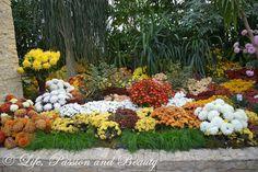 Life, passion and beauty: Pictures: Expozitia de flori, fructe si seminte Pumpkin, Plants, Outdoor, Outdoors, Gourd, Pumpkins, Plant, Outdoor Games, Squash