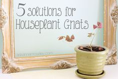 How to get rid of Gnats in the House » Ask Anna This is awesome and really easy!