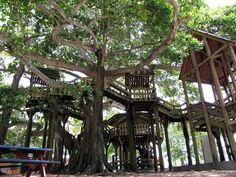 This is something I need to do in Puerto Rico! Aguadilla Treehouse and Park