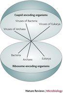 The Origins of Viruses