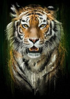 Wildlife Paintings, Wildlife Art, Animal Paintings, Animal Drawings, Tiger Artwork, Tiger Painting, Cool Artwork, Big Cats Art, Cat Art
