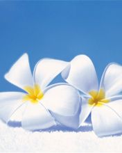 the first time i went to hawaii... the scent of plumeria filled the air.  i thought it was magical.  there were girls in hula skirts with about 200 leis for a tour group on the plane.  it was still magical.