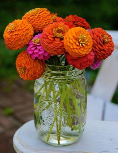 love zinnias, great cut flower, blooms all summer and the more you pick them the more they bloom, and they come in all colors.....  love these flowers!