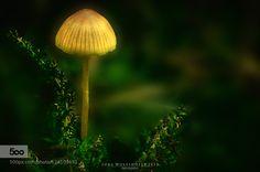 Mushroom by JrgWolfshfer. Please Like http://fb.me/go4photos and Follow @go4fotos Thank You. :-)