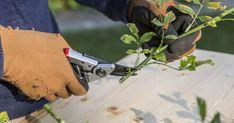 Aussaat, Stecklinge, Steckhölzer, Veredelung: Es gibt verschiedene Methoden, mit denen man Rosen vermehren kann. Hier finden Sie detaillierte Anleitungen. Lost Garden, Garden Boots, Outside Living, Winter Garden, Shabby Chic, Herbs, Plants, Gardening, Tricks