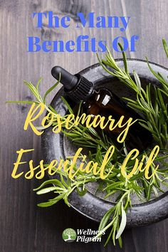 Rosemary essential oil has many good qualities and researchers have found it beneficial in the treatment of numerous conditions, from many aches and pains to keeping hair shiny and soft. Essential Oils For Colds, Essential Oil Uses, Healing Herbs, Medicinal Herbs, Essential Oil Distiller, Infused Oils, Herbal Extracts, Oils For Skin, Essentials