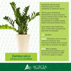 Zamioculca – planta para interior e fácil de cuidar | Blog Jardinices Zee Zee Plant, Garden Deco, Potted Plants, Cactus Plants, Indoor Plants, Indoor Garden, Plant Holders, Plantar, Houseplants