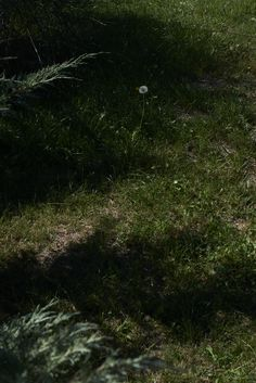 #bugattifashion #bugattitravel #ss14 #southfrance #Nature #GreenGrass #TravelPhotography