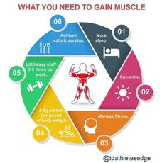 Today's Edge: Building muscle requires more than slurping protein shakes and doing curls. Muscle gain takes a comprehensive approach. Here are 6 components to efficient muscle gain: Muscle Man, Gain Muscle, Build Muscle, Lift Heavy, Protein Shakes, Stress Management, Body Weight, Gaining Muscle, Muscle Up