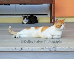 Tortola Cat Photo by Kellee Fabre Photography