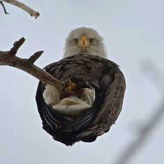 Amazing photo