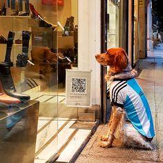 Sempre que me perguntam porque gosto tanto de #BuenosAires respondo: São as pessoas.http://ift.tt/2drWk61 - - - - - - - - - - - #Argentina #doğum#dogstagram #doggies#dogsandpals #buenosairescity #buenosairesciudad #buenosairesargentina #buenosairesquerido #buenosairesmeencanta #buenosairesdesign #argentina_ig #argentina360 #argentinaig #VisitArgentina #dogwalk#PureArgentine #argentinatravel #dogsofinsta#ComerDormirViajar #CDVTripJujuy #dogwalker#dog#doggylove#doglover#dogtraining