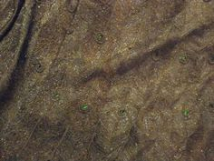 """Detail of Mary Curzon's famous """"peacock feather"""" gown, embroidered in India with green scarabs at the center of each peacock feather's """"eye."""" The gown was designed by Worth for the 1903 Delhi Durbar."""
