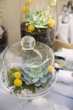 Succulent terrariums. Would make great centerpieces.