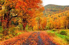 Autumn : Boston Photographer | Boston Photos | Urban Photography | Travel photography | Boston |boston mass photos|