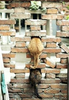 This picture apart of being cute with the cat tails and all, it also shows unity in the brick wall apart of having kind of equal spaces between it and also texture because of the cat's tails and the brick wall.