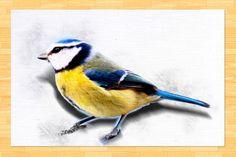 Kezdőlap - gazigazito.hu Bird, Animals, Animales, Animaux, Birds, Animal, Animais