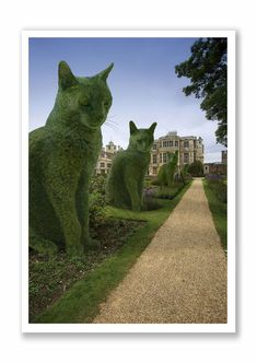 Topiary Cat - The Avenue